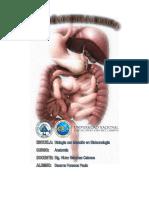 Informe Sistema Digestivo