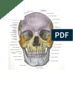 Trauma maxilofacial rey.docx
