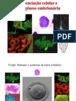 3 diferenciação celular e morfogenese embrionária.pdf