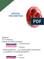 6 sistema tegumentar (2).pdf