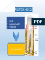 Cemento Ligamento y Hueso Alveolar 2