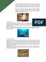 Animales en Peligro de Extincion 2