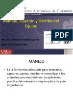 Manejo Del Equino