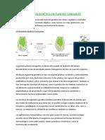 291053867 Ingenieria Genetica en Plantas y Animales Ecologia