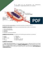 Componentes Celula Bacteriana (1)
