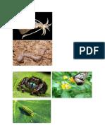 invertebrata.docx
