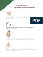 207974089-Los-simbolos-curativos.pdf