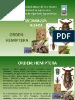 Hemiptera.pptx