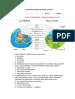 EVALUACION FINALDE CIENCIAS NATURALES  PERIODO II 7°