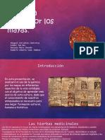 Proyecto Química Mayas