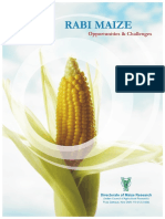Rabi Maize-Opportunities and Challenges