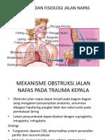 Anatomi Dan Fisiologi Jalan Napas