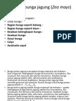 Morfologi Bunga Jagung (Zea Mays)