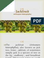 Jackfruit Report