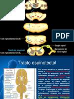 Charla de Neuroanatomia
