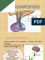 Neurohipofisis Point