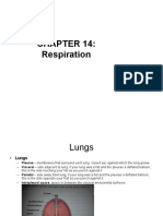 Respiration review