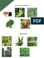 Plantas de Alimentos