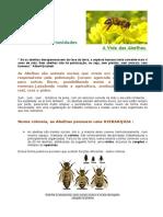abelhas_curiosidades.pdf