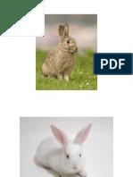 Conejo Cuy