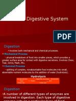 Human_Digestive_System_final[1].pptx