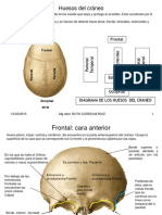 263150409-huesos-craneo.pdf