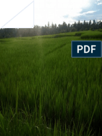 foto pemandangan sawah 2.pdf