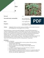 Panax Quinquefolius American Ginseng herbal materia medica