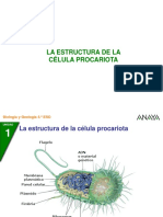4BG_01_celula_procariota.ppt