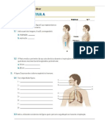 Ficha Formativa a Respiração