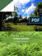 divisio tumbuhan