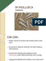 Phylum Gastropoda