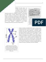 cromosoma.pdf
