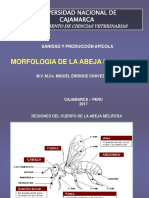4_morfologia de La Abeja Melifera Clase 4a