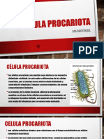 Celula Procariota y Bacterias