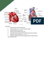 Fungsi Jantung