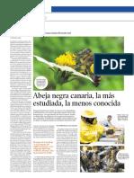 Abeja Negra Canaria (Millares, Yuri - Octubre 2018