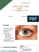 Aparelho Da Visão – Bolbo Ocular