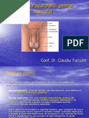 penis masculin inserat