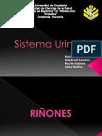 Diapositivas Sistema Urinario