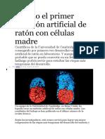 Creado El Primer Embrión Artificial de Ratón Con Células Madre