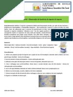 Atividade Experimental_observação de Bactérias Do Iogurte
