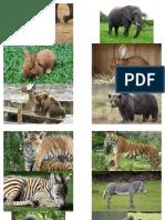 lesson 1 animals