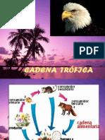 DIAPOSITIVAS PARA EXPLICAR RED TROFICA MUY BUENA