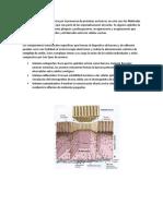 Adherencia de Células Epiteliales