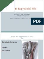 12. Anatomi Reproduksi Pria