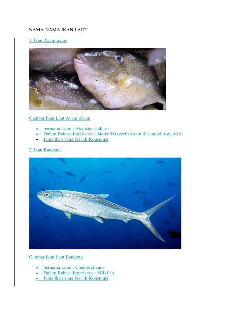 Nama Ikan Laut