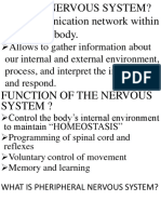 Anatomy Report