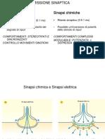 Lezione 10 sinapsi