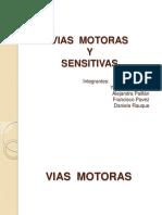vias sensitivas y motoras